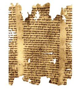 A portion of the second discovered copy of the Isaiah scroll.